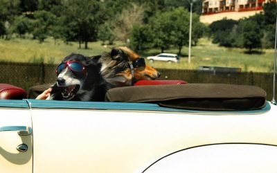 Safety Tips When Driving With Pets